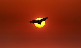 Flying Fox or fruit bat over red sky. Halloween night with bat flying at sunset panoramic view Royalty Free Stock Photo