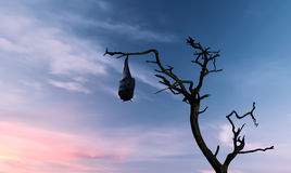 Flying fox hanging on tree branch over blue sky. Halloween background with flying fox over bright sky Royalty Free Stock Photos