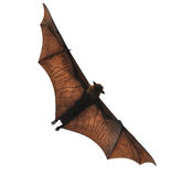 Flying fox - huge bat isolated on white background. Flying fox - huge bat isolated on a white background stock photo