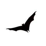 Flying fox - huge bat on white background Stock Image