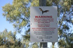 Flying Foxes Bats Warning sign. Around 10 thousand Flying-foxes established their first permanent camp in Adelaide in 2010 that carry viruses that can infect stock photos