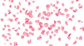 Free Flying Fresh Pink Rose Petals On Background Stock Images - 171319404