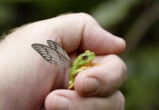 Flying frog. Image dpicting the finding of a new species. The hand represents human protection Royalty Free Stock Images