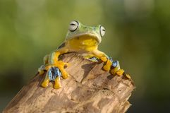 Flying frog. Look up at the sun Royalty Free Stock Images