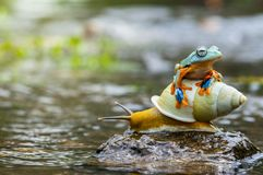 Flying frog up the slug stock photos