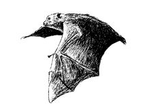 Flying fruit bat. This is my hand drawing . Fruit bats are believed to carry and spread the Ebola virus Royalty Free Stock Images