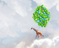 Flying giraffe Royalty Free Stock Photos