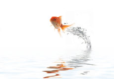 Flying golden fish Royalty Free Stock Image