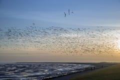 Flying goose, Terschelling The Netherlands Stock Image