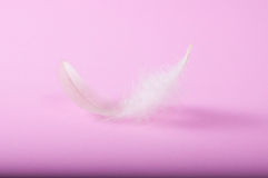 Flying gray feather Royalty Free Stock Photography