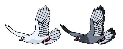 Flying gray pigeon and white dove. Vector illustration of a cartoon  flying gray pigeon and white dove Stock Images
