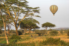 Flying green and yellow balloon flying over the savannah Stock Photo