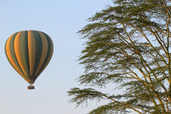 Flying green and yellow balloon near an acacia tree Royalty Free Stock Photo