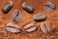 Flying ground coffee beans bean Royalty Free Stock Photography