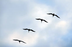 Flying group of seagulls Stock Photo