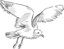 Free Flying Gull Royalty Free Stock Photos - 35209538