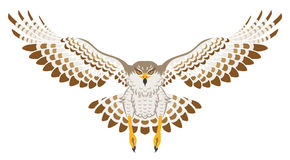 Flying Hawk ,Front view, Isolated Royalty Free Stock Photos