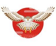 Flying Hawk with Sun Stock Photo