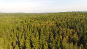 Flying high above spruce forest stock video footage