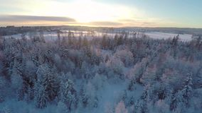 Flying high above the winter forest in sunset stock video