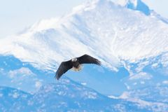 Free Flying High Over The Rocky Mountains Royalty Free Stock Photo - 138461155