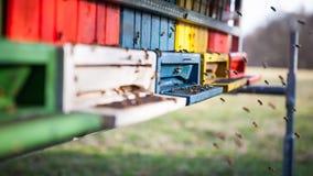 Flying honey bees Stock Photo