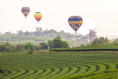 Flying hot air balloon over the mountains and tea plantation Stock Images