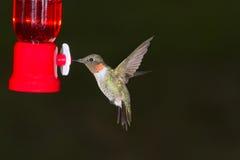Flying hummingbird Stock Image