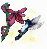 Flying Hummingbird (Zen Pictures II, 2012) Stock Photo