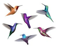 Free Flying Hummingbirds. Little Colored Birds Exotic Jungle Colored Little Hummingbirds Vector Realistic Tropical Collection Royalty Free Stock Photography - 160448757