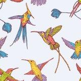 Flying hummingbirds Stock Photography