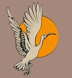 Flying ibis bird Stock Photography