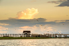 Flying intermediate egrets in front of U-bein bridge Royalty Free Stock Photography