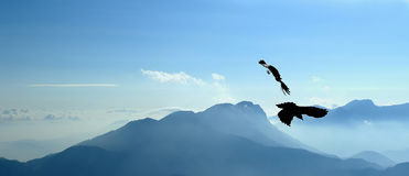 Flying jackdaws. Two jackdaws performing their flying skills above slovene alps Stock Photos
