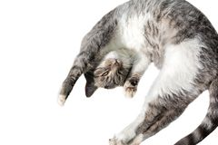 Flying or jumping funny tabby kitten cat isolated on white background. Copy space. Greeting card template stock images