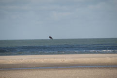 Flying kite surfer at deserted beach Stock Images