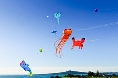 Flying kites Stock Images