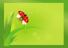 Flying ladybug with grass Royalty Free Stock Photography