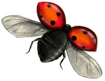 Flying ladybug isolated Royalty Free Stock Image