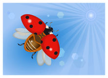 Flying ladybug at the sky Royalty Free Stock Photo