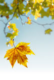 Flying Leaf Royalty Free Stock Photography