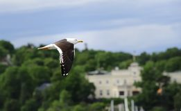 Flying By Stock Image