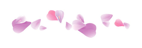Flying light Pink Purple petals isolated on white background. Roses petals. Falling Cherry flowers. Vector EPS 10 cmyk.  Stock Photos