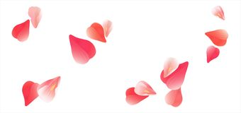 Flying light Pink Red petals isolated on white background. Roses petals. Falling Cherry flowers. Vector EPS 10 cmyk Royalty Free Stock Photography