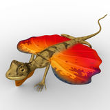 Flying Lizard. Draco dussumieri, commonly known as the southern flying lizard, is a species of agamid lizard capable of gliding from tree to tree. It is found in Stock Photography