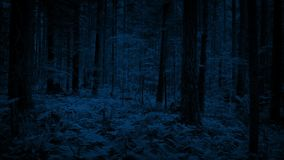 Flying through dense woodland in the dark. Flying low to the ground over ferns and plants in the woods at night stock video footage