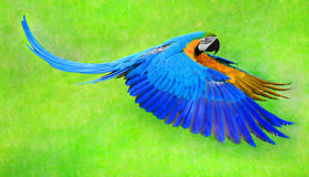 Flying macaw parro. T isolated on the green background stock photo