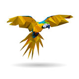 Flying macaw - vector illustration Royalty Free Stock Image