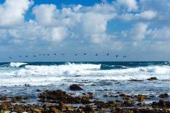 Flying migratory ducks Ocean Royalty Free Stock Photography
