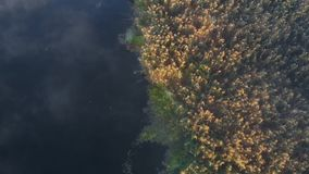 Flying misty morning over the river, top view stock video